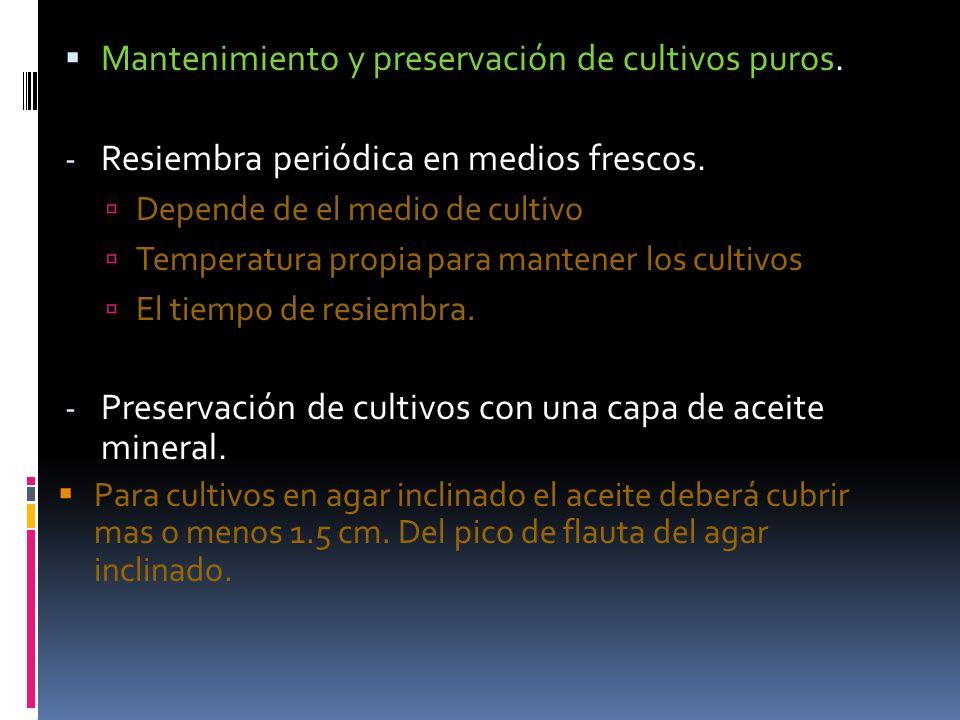 Mantenimiento y preservación de cultivos puros. - Resiembra periódica en medios frescos. Depende de el medio de cultivo Temperatura propia para manten