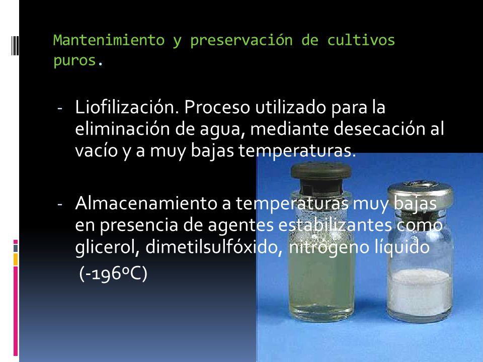 Mantenimiento y preservación de cultivos puros. - Liofilización. Proceso utilizado para la eliminación de agua, mediante desecación al vacío y a muy b