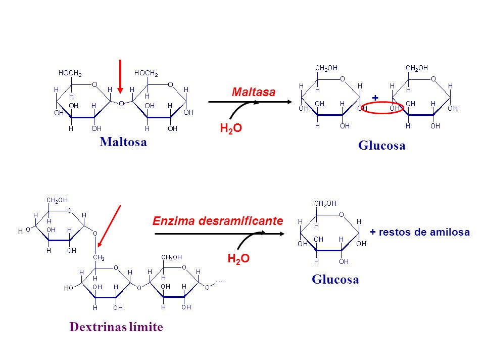 Maltosa Maltasa H2OH2O Dextrinas límite H H H2OH2O Enzima desramificante Glucosa + restos de amilosa Glucosa +