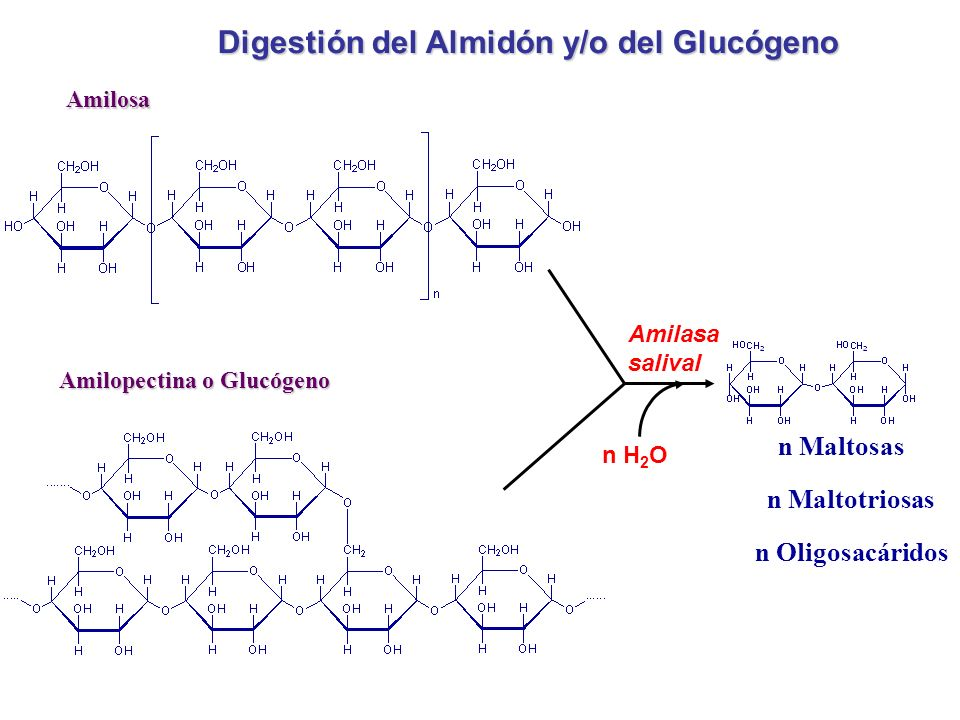 Amilosa Amilopectina o Glucógeno n Maltosas n Maltotriosas n Oligosacáridos Digestión del Almidón y/o del Glucógeno Amilasa salival n H 2 O