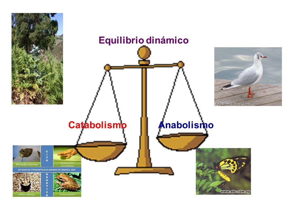 Equilibrio dinámico AnabolismoCatabolismo