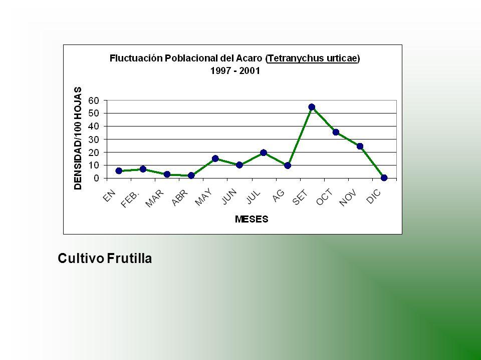 ESTRATEGIA DE CONTROL Se debe realizar inspecciones periódicas en el cultivo, examinando la parte inferior de las hojas.