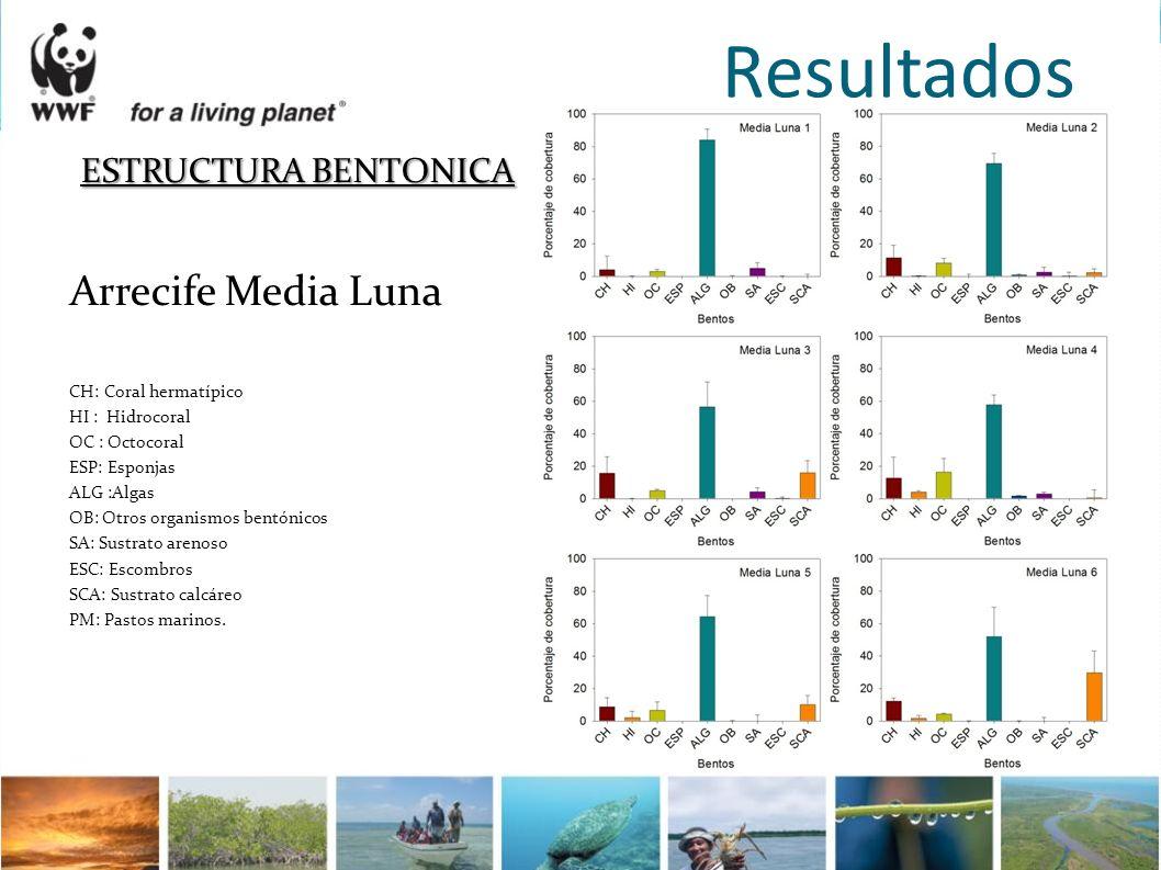 Resultados ESTRUCTURA BENTONICA Arrecife Media Luna CH:Coral hermatípico HI : Hidrocoral OC : Octocoral ESP: Esponjas ALG :Algas OB: Otros organismos