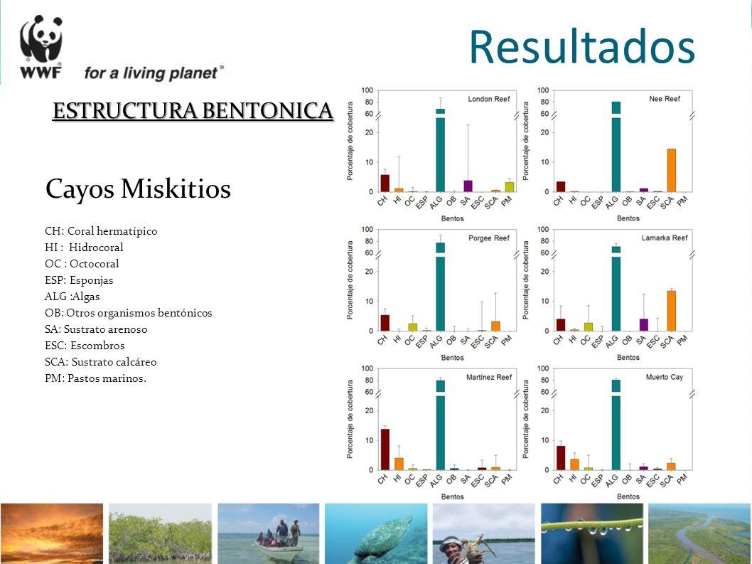 Resultados ESTRUCTURA BENTONICA Cayos Miskitios CH:Coral hermatípico HI : Hidrocoral OC : Octocoral ESP: Esponjas ALG :Algas OB: Otros organismos bent