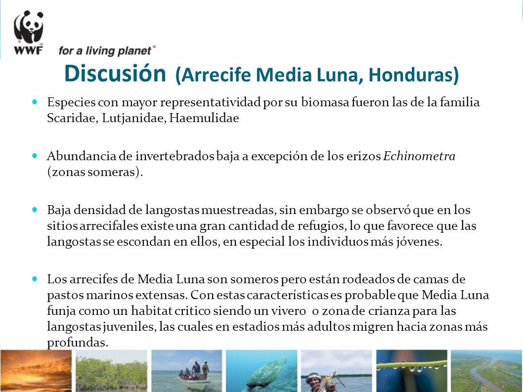 Discusión (Arrecife Media Luna, Honduras) Especies con mayor representatividad por su biomasa fueron las de la familia Scaridae, Lutjanidae, Haemulida