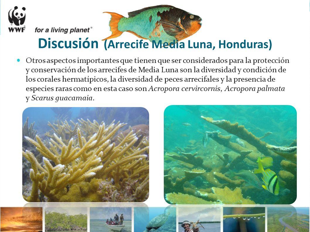 Otros aspectos importantes que tienen que ser considerados para la protección y conservación de los arrecifes de Media Luna son la diversidad y condic