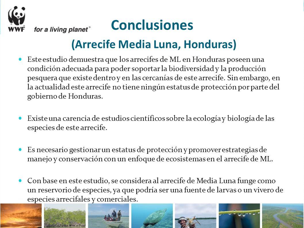 Conclusiones (Arrecife Media Luna, Honduras) Este estudio demuestra que los arrecifes de ML en Honduras poseen una condición adecuada para poder sopor