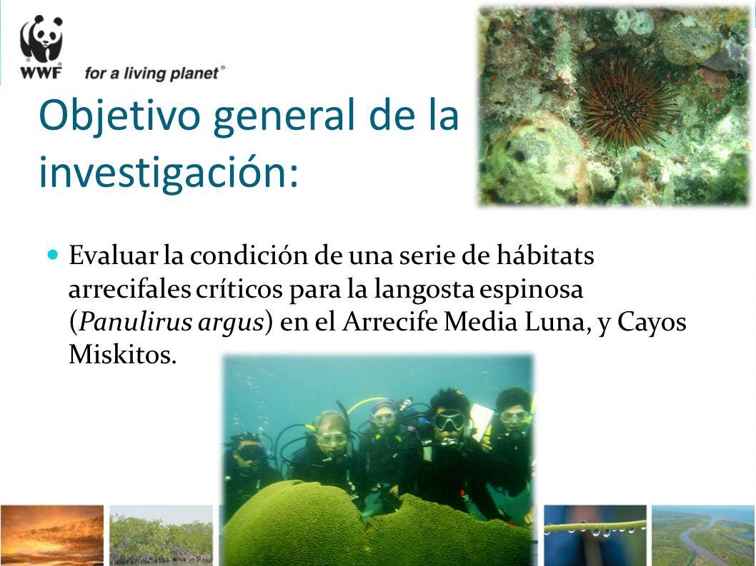 Objetivo general de la investigación: Evaluar la condición de una serie de hábitats arrecifales críticos para la langosta espinosa (Panulirus argus) e
