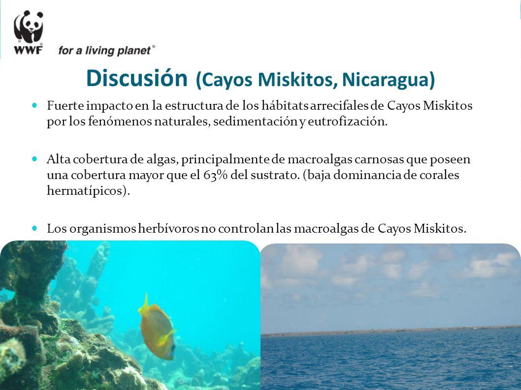 Fuerte impacto en la estructura de los hábitats arrecifales de Cayos Miskitos por los fenómenos naturales, sedimentación y eutrofización. Alta cobertu