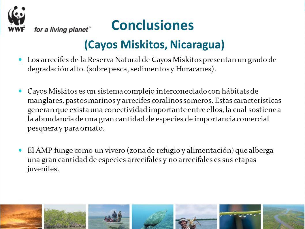 Conclusiones (Cayos Miskitos, Nicaragua) Los arrecifes de la Reserva Natural de Cayos Miskitos presentan un grado de degradación alto. (sobre pesca, s