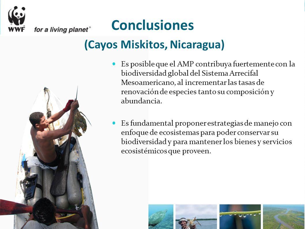 Conclusiones (Cayos Miskitos, Nicaragua) Es posible que el AMP contribuya fuertemente con la biodiversidad global del Sistema Arrecifal Mesoamericano,