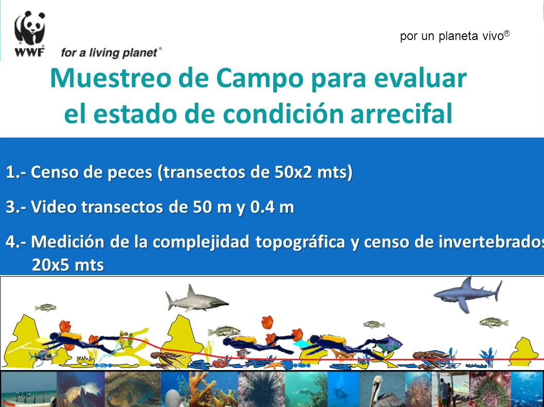 1.- Censo de peces (transectos de 50x2 mts) 3.- Video transectos de 50 m y 0.4 m 4.- Medición de la complejidad topográfica y censo de invertebrados 2