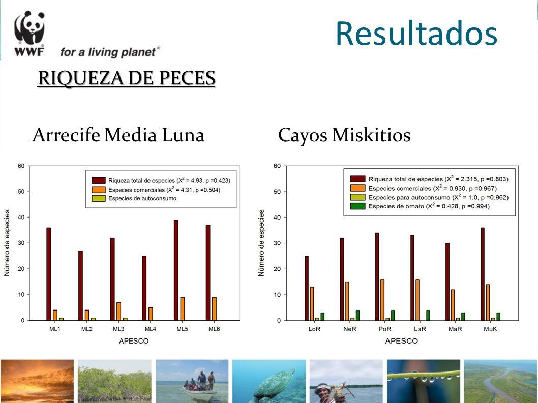 Resultados RIQUEZA DE PECES Arrecife Media Luna Cayos Miskitios