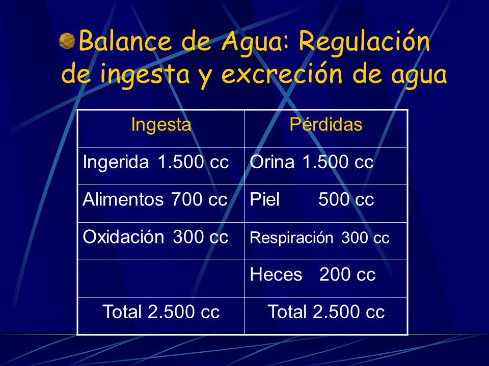 Balance de Agua: Regulación de ingesta y excreción de agua IngestaPérdidas Ingerida 1.500 ccOrina 1.500 cc Alimentos 700 ccPiel 500 cc Oxidación 300 c