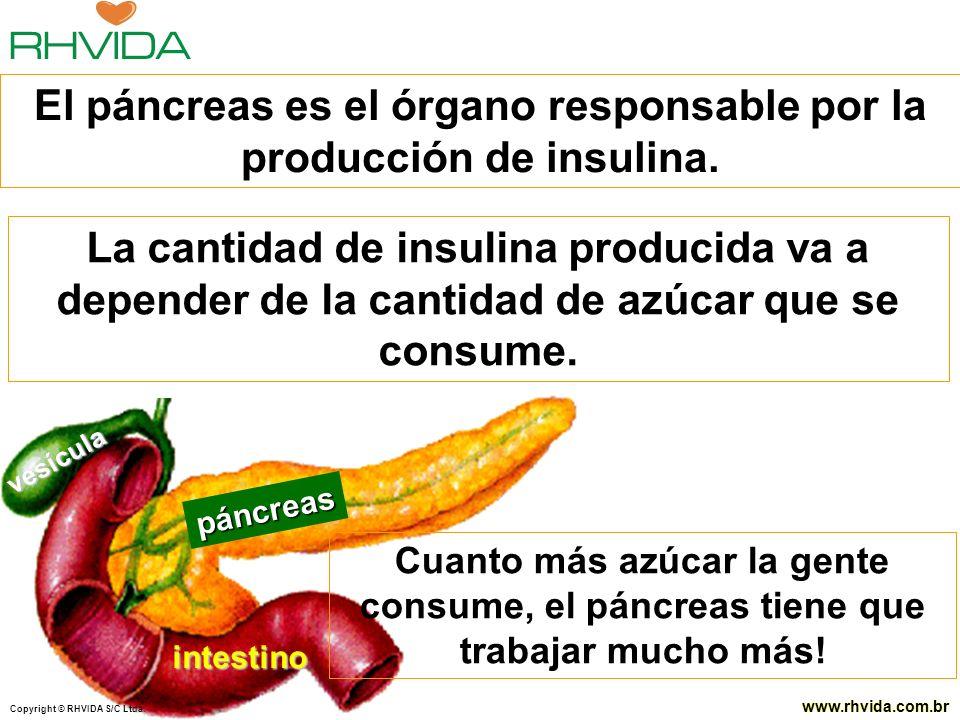 Copyright © RHVIDA S/C Ltda. www.rhvida.com.br Copyright © RHVIDA S/C Ltda. www.rhvida.com.br páncreas intestino vesícula El páncreas es el órgano res