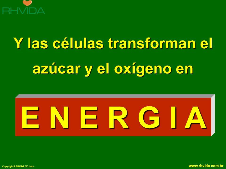 Copyright © RHVIDA S/C Ltda. www.rhvida.com.br Y las células transforman el azúcar y el oxígeno en E N E R G I A