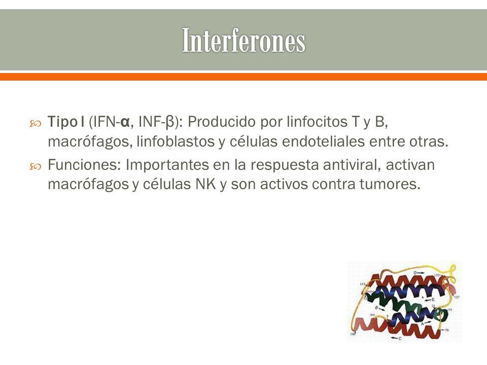 Tipo I (IFN- α, INF- β ): Producido por linfocitos T y B, macrófagos, linfoblastos y células endoteliales entre otras. Funciones: Importantes en la re