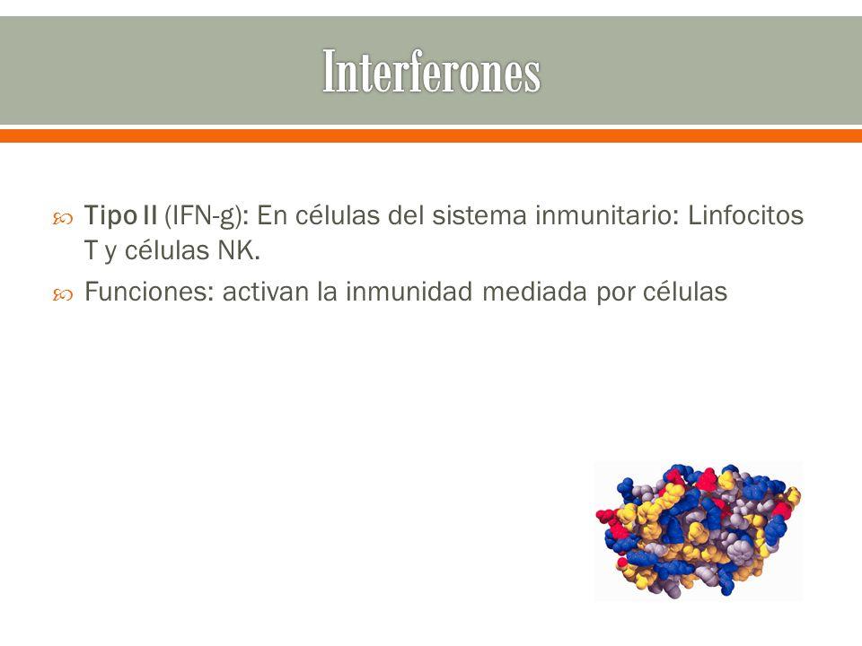 Tipo II (IFN-g): En células del sistema inmunitario: Linfocitos T y células NK. Funciones: activan la inmunidad mediada por células