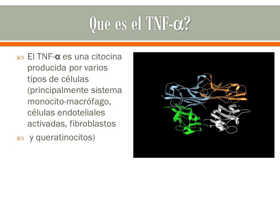 El TNF- α es una citocina producida por varios tipos de células (principalmente sistema monocito-macrófago, células endoteliales activadas, fibroblast