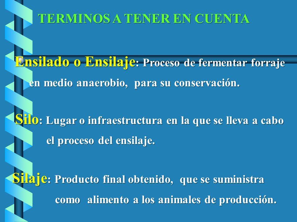 TERMINOS A TENER EN CUENTA Ensilado o Ensilaje : Proceso de fermentar forraje Ensilado o Ensilaje : Proceso de fermentar forraje en medio anaerobio, p