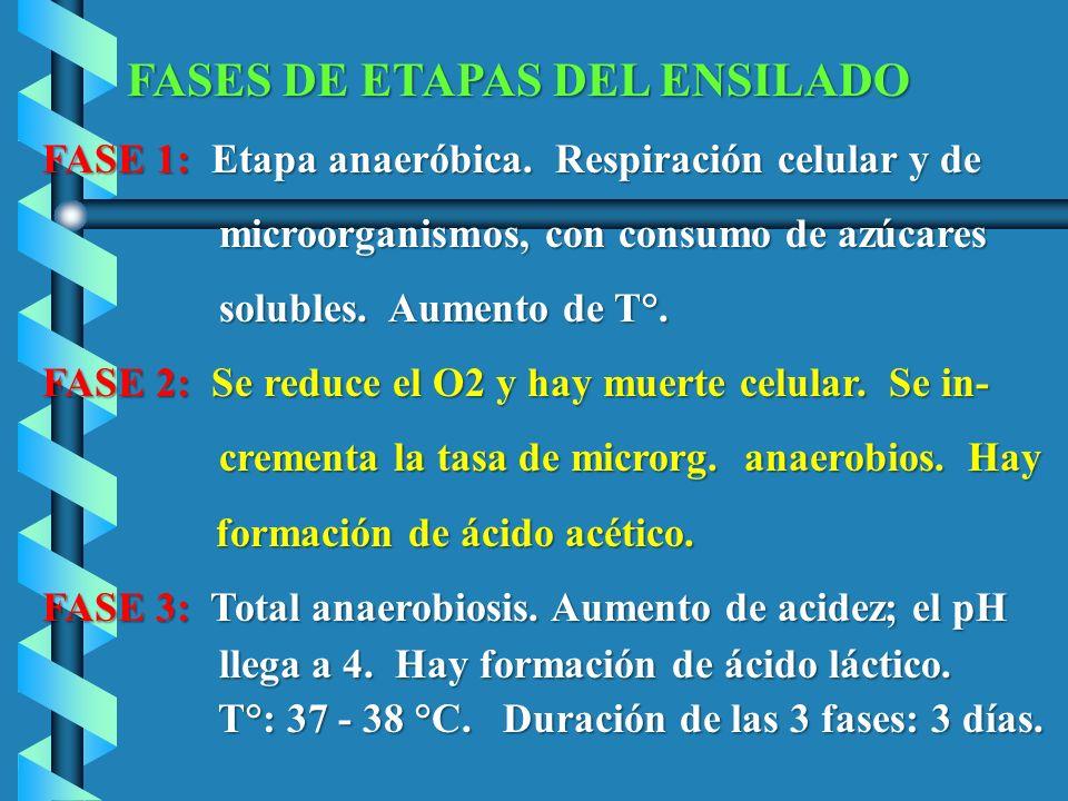 FASES DE ETAPAS DEL ENSILADO FASE 1: Etapa anaeróbica. Respiración celular y de FASE 1: Etapa anaeróbica. Respiración celular y de microorganismos, co