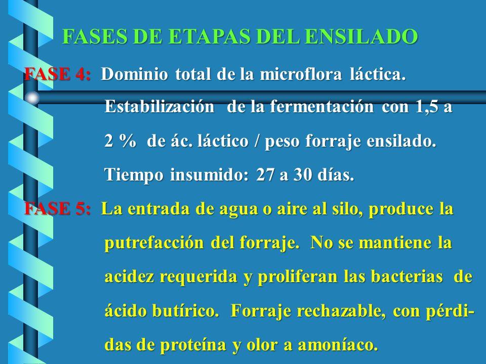 FASES DE ETAPAS DEL ENSILADO FASE 4: Dominio total de la microflora láctica. FASE 4: Dominio total de la microflora láctica. Estabilización de la ferm