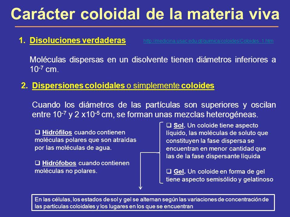 Carácter coloidal de la materia viva 1.Disoluciones verdaderas Moléculas dispersas en un disolvente tienen diámetros inferiores a 10 -7 cm. 2.Dispersi