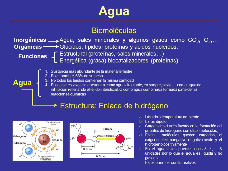 Agua Biomoléculas Inorgánicas Agua, sales minerales y algunos gases como CO 2, O 2,… OrgánicasGlúcidos, lípidos, proteínas y ácidos nucleídos. Estruct