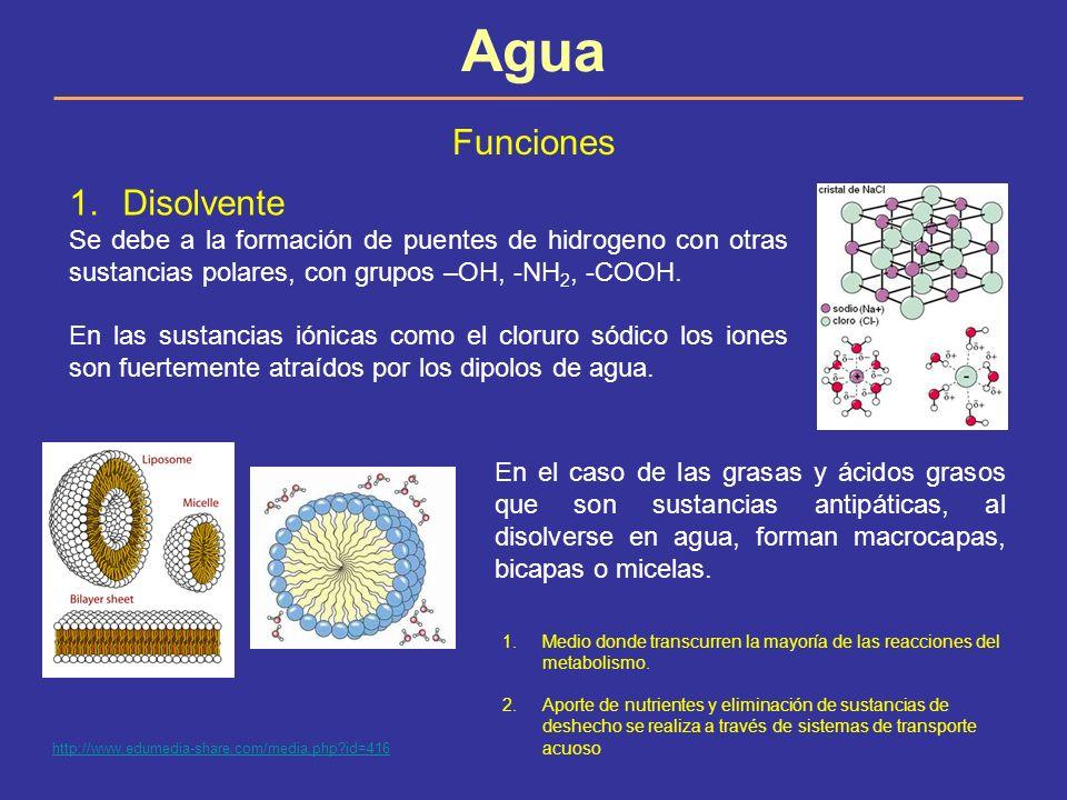 Agua Funciones 1.Disolvente Se debe a la formación de puentes de hidrogeno con otras sustancias polares, con grupos –OH, -NH 2, -COOH. En las sustanci