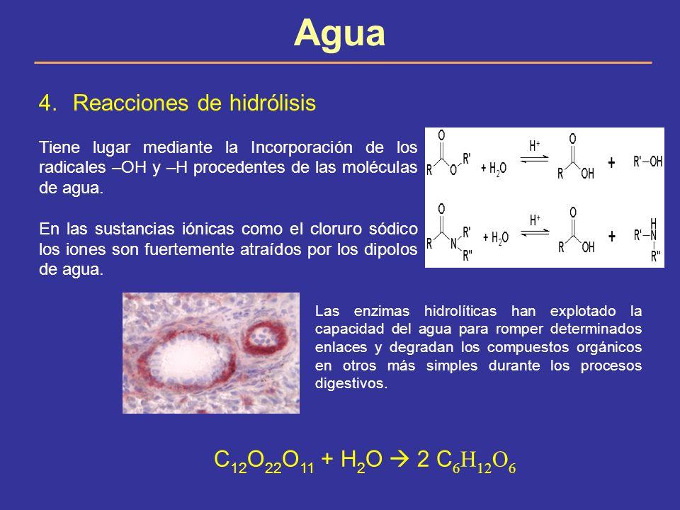 Agua 4.Reacciones de hidrólisis Tiene lugar mediante la Incorporación de los radicales –OH y –H procedentes de las moléculas de agua. En las sustancia