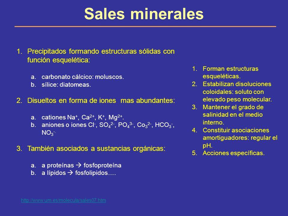 Sales minerales 1.Precipitados formando estructuras sólidas con función esquelética: a.carbonato cálcico: moluscos. b.sílice: diatomeas. 2.Disueltos e