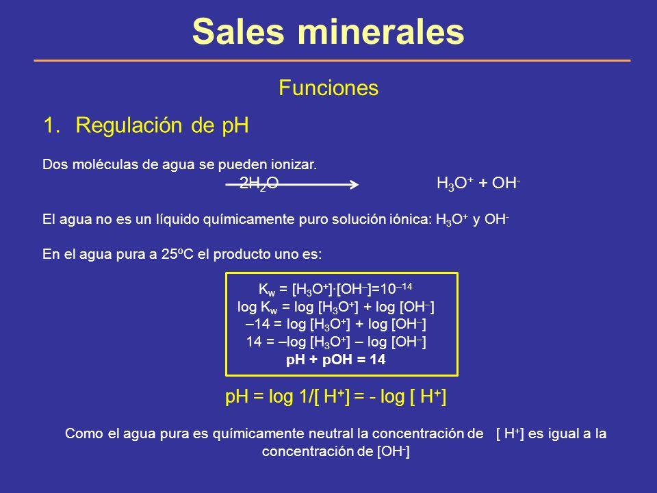 Sales minerales Funciones 1.Regulación de pH Dos moléculas de agua se pueden ionizar. 2H 2 O H 3 O + + OH - El agua no es un líquido químicamente puro