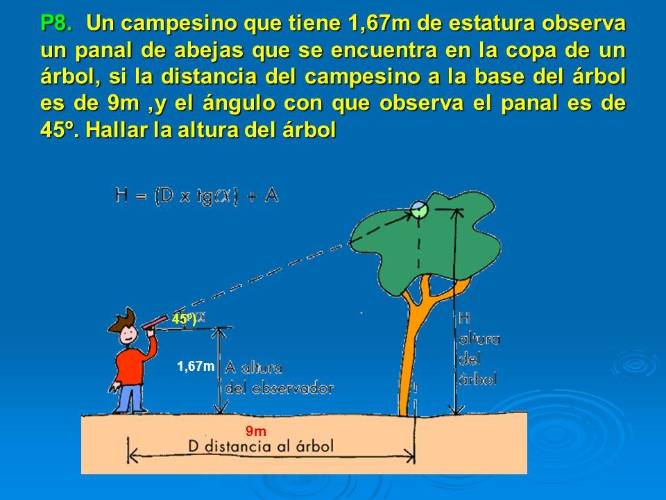 P8. Un campesino que tiene 1,67m de estatura observa un panal de abejas que se encuentra en la copa de un árbol, si la distancia del campesino a la ba
