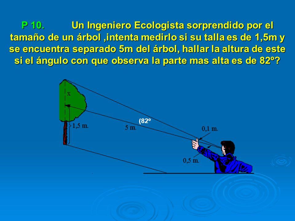 P 10. Un Ingeniero Ecologista sorprendido por el tamaño de un árbol,intenta medirlo si su talla es de 1,5m y se encuentra separado 5m del árbol, halla