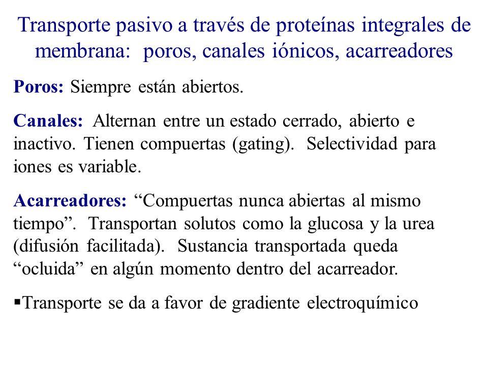 Transporte pasivo a través de proteínas integrales de membrana: poros, canales iónicos, acarreadores Poros: Siempre están abiertos. Canales: Alternan