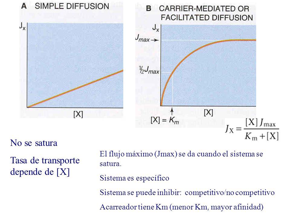 No se satura Tasa de transporte depende de [X] El flujo máximo (Jmax) se da cuando el sistema se satura. Sistema es específico Sistema se puede inhibi