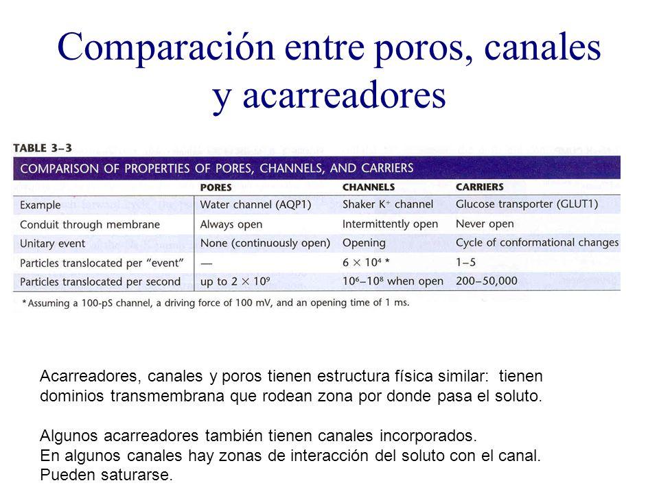 Comparación entre poros, canales y acarreadores Acarreadores, canales y poros tienen estructura física similar: tienen dominios transmembrana que rode