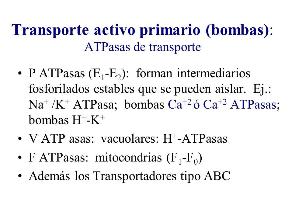 Transporte activo primario (bombas): ATPasas de transporte P ATPasas (E 1 -E 2 ): forman intermediarios fosforilados estables que se pueden aislar. Ej