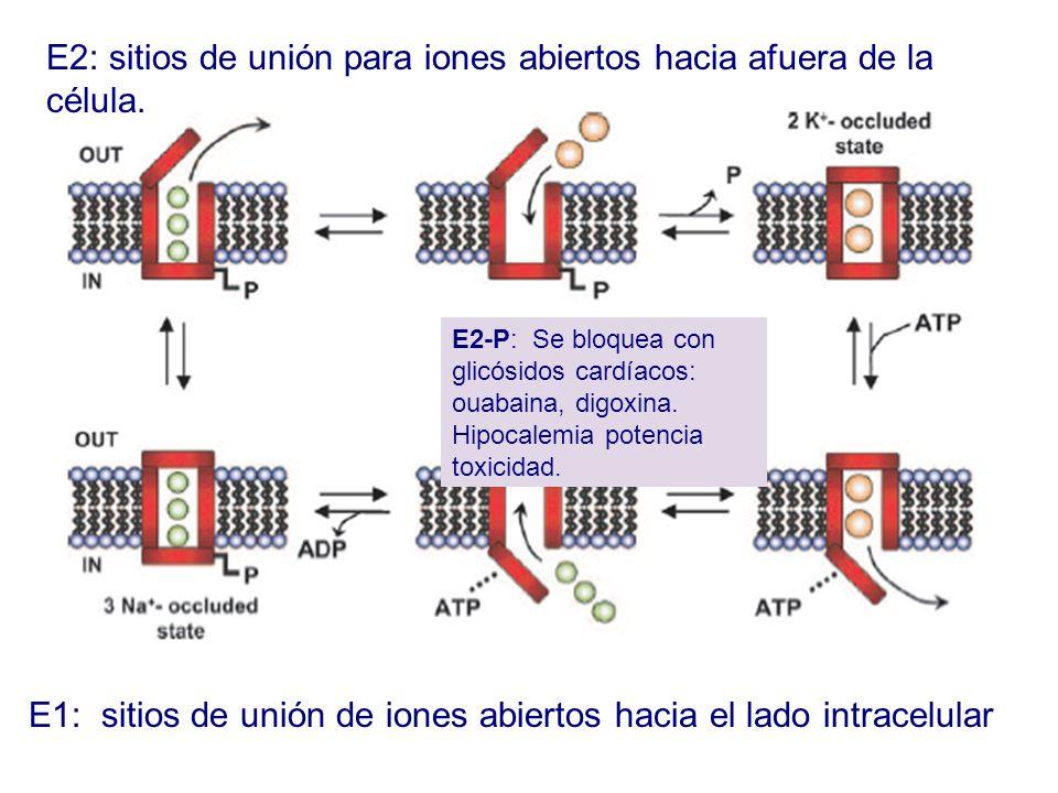 E2: sitios de unión para iones abiertos hacia afuera de la célula. E1: sitios de unión de iones abiertos hacia el lado intracelular E2-P: Se bloquea c