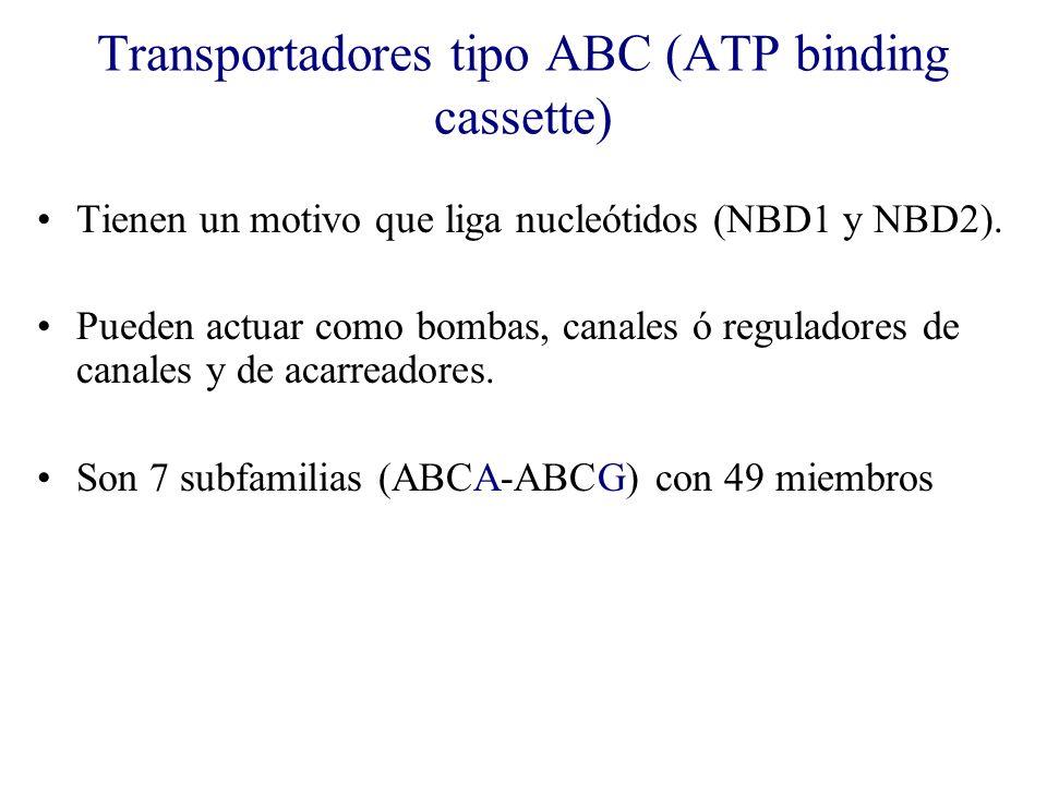 Transportadores tipo ABC (ATP binding cassette) Tienen un motivo que liga nucleótidos (NBD1 y NBD2). Pueden actuar como bombas, canales ó reguladores