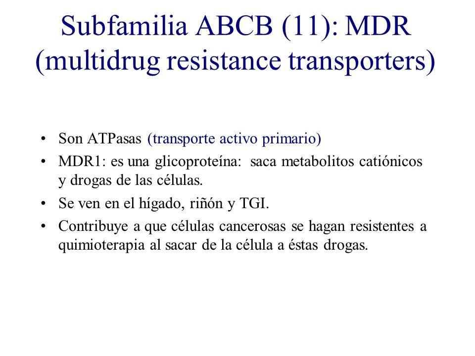 Subfamilia ABCB (11): MDR (multidrug resistance transporters) Son ATPasas (transporte activo primario) MDR1: es una glicoproteína: saca metabolitos ca