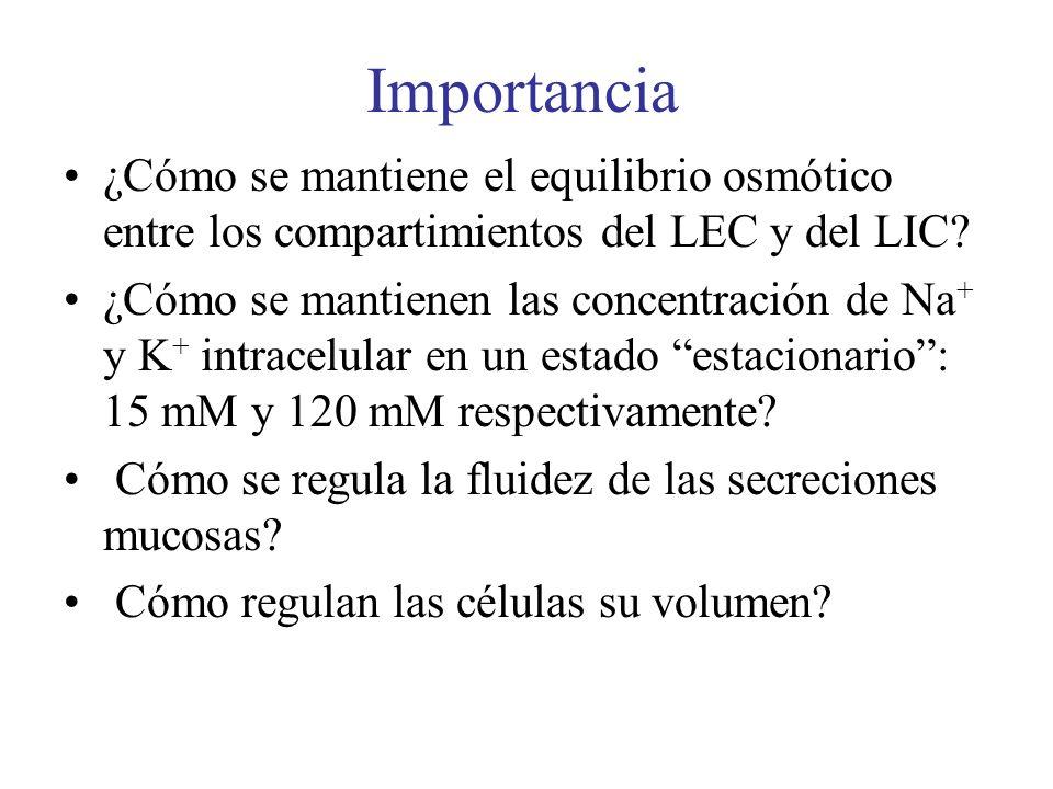 Importancia ¿Cómo se mantiene el equilibrio osmótico entre los compartimientos del LEC y del LIC? ¿Cómo se mantienen las concentración de Na + y K + i