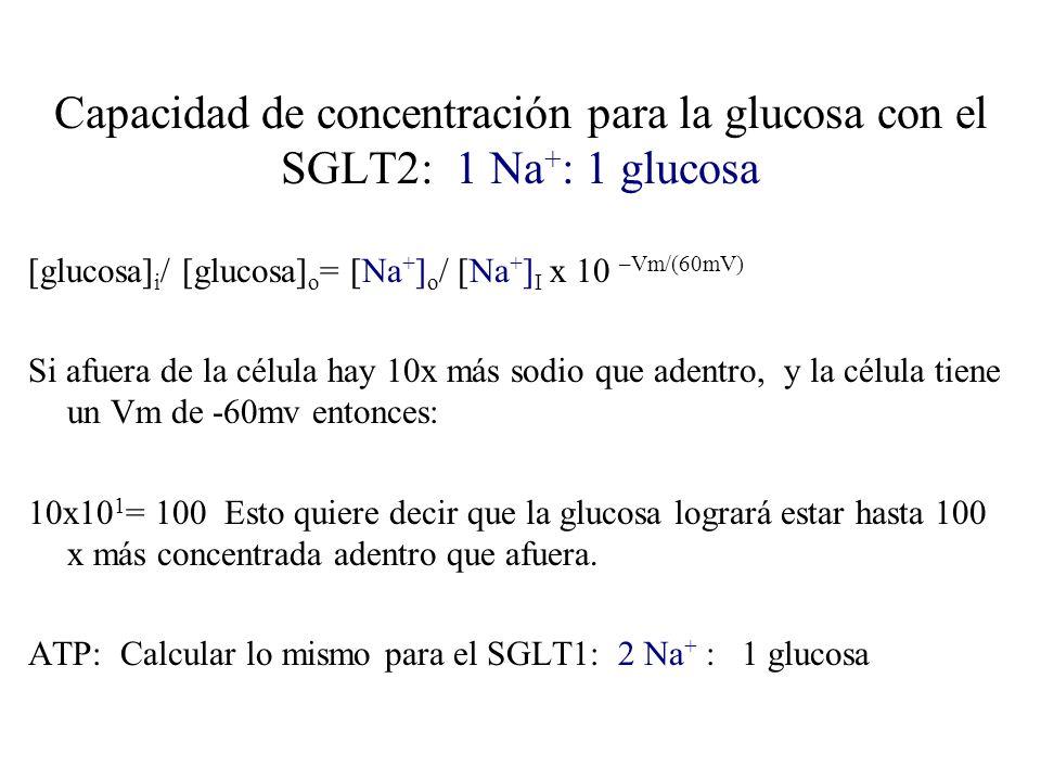 Capacidad de concentración para la glucosa con el SGLT2: 1 Na + : 1 glucosa [glucosa] i / [glucosa] o = [Na + ] o / [Na + ] I x 10 –Vm/(60mV) Si afuer