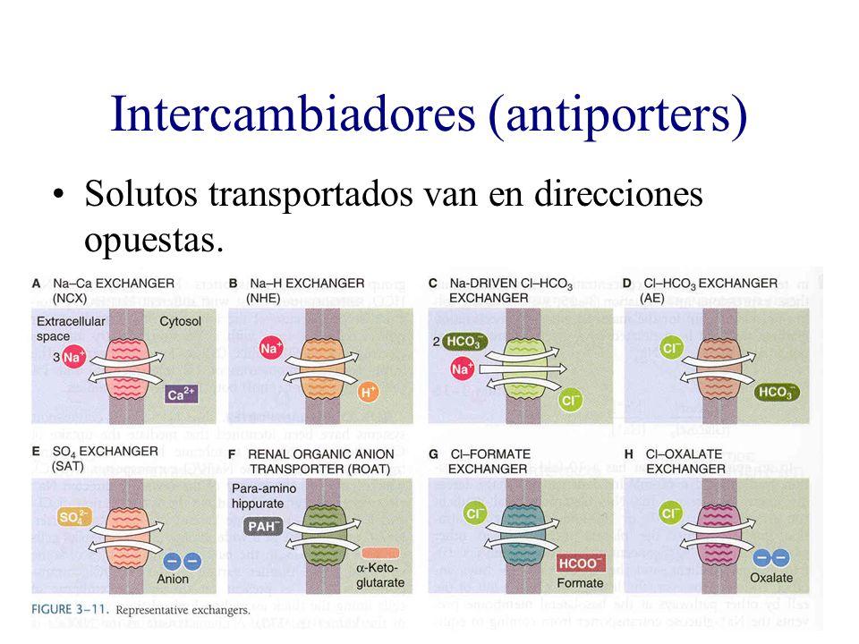 Intercambiadores (antiporters) Solutos transportados van en direcciones opuestas.