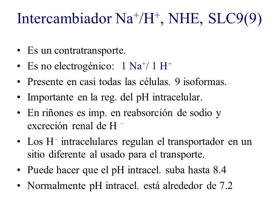 Intercambiador Na + /H +, NHE, SLC9(9) Es un contratransporte. Es no electrogénico: 1 Na + / 1 H + Presente en casi todas las células. 9 isoformas. Im