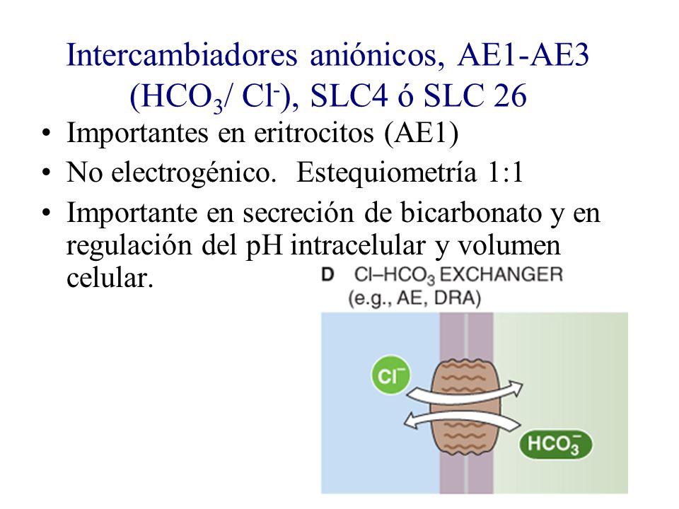 Intercambiadores aniónicos, AE1-AE3 (HCO 3 / Cl - ), SLC4 ó SLC 26 Importantes en eritrocitos (AE1) No electrogénico. Estequiometría 1:1 Importante en