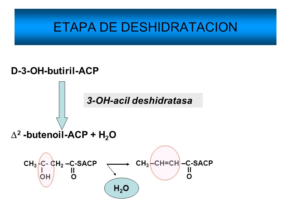 ETAPA DE DESHIDRATACION D-3-OH-butiril-ACP 2 -butenoil-ACP + H 2 O 3-OH-acil deshidratasa CH 3 -C- CH 2 –C-SACP OH O l ll CH 3 –CH=CH –C-SACP O ll H2O