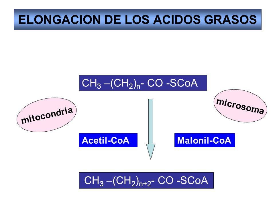 ELONGACION DE LOS ACIDOS GRASOS CH 3 –(CH 2 ) n - CO -SCoA CH 3 –(CH 2 ) n+2 - CO -SCoA Acetil-CoAMalonil-CoA mitocondria microsoma