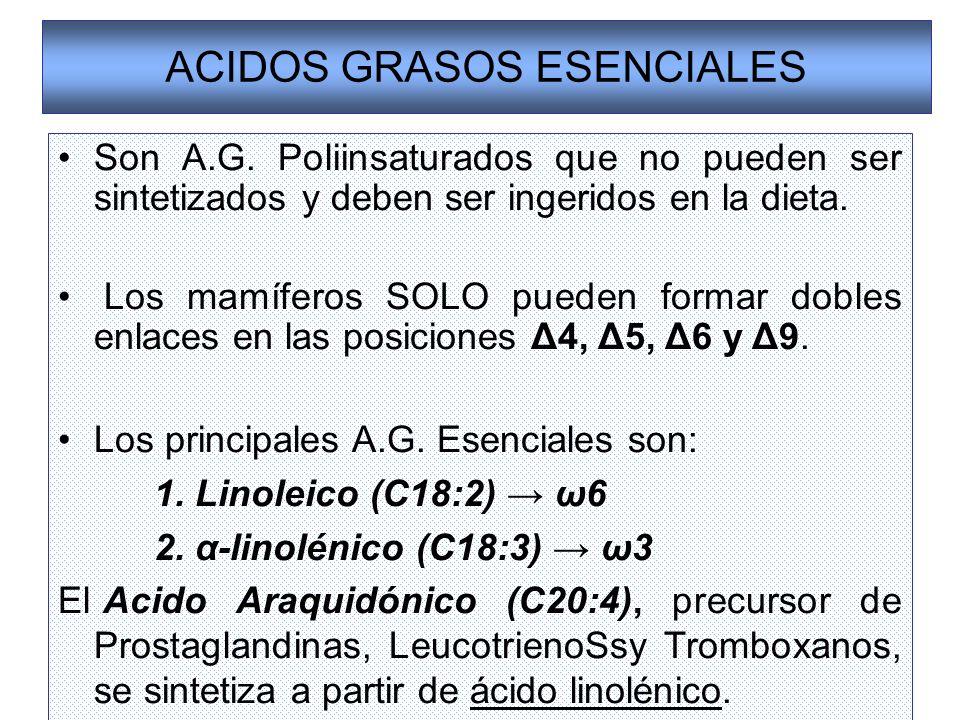 ACIDOS GRASOS ESENCIALES Son A.G. Poliinsaturados que no pueden ser sintetizados y deben ser ingeridos en la dieta. Los mamíferos SOLO pueden formar d