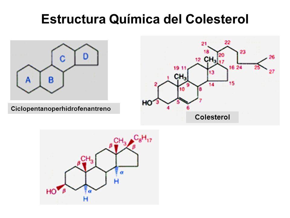 Estructura Química del Colesterol Ciclopentanoperhidrofenantreno Colesterol